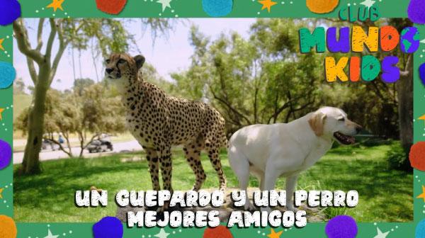 Nuestros amigos del Zoológico San Diego nos presentan unos amigos muy especiales